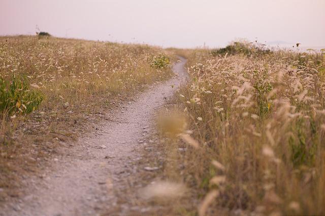 Bild av somrigt landskap