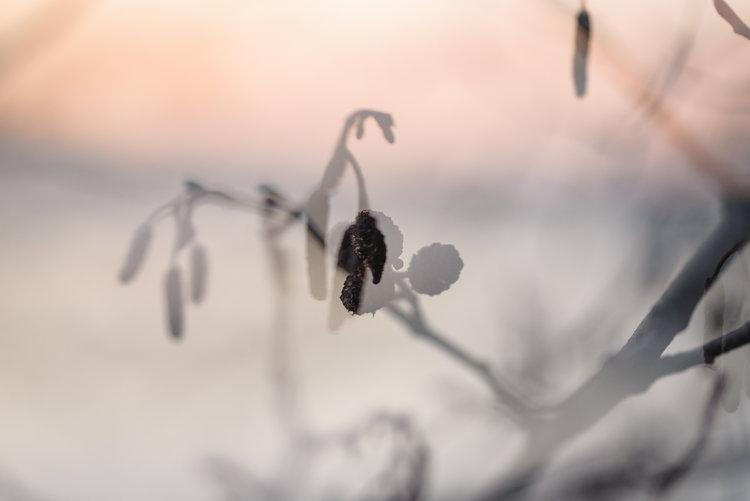 Bild av en vintrig växt